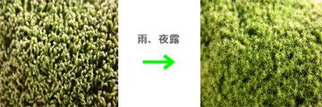 03_ame.jpg