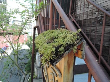 25 藏家事務所 植木植え込み