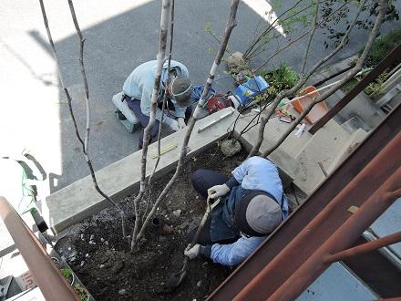 27 藏家事務所 植木植え込み