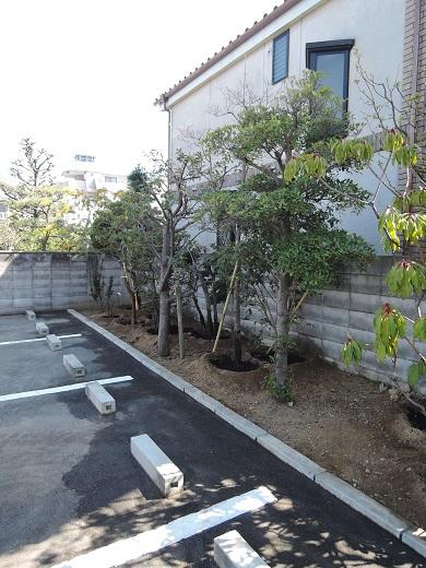 13 西宮H様邸既存建物植木移動