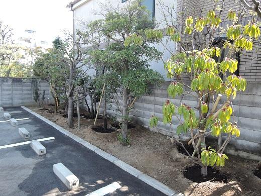 14 西宮H様邸既存建物植木移動